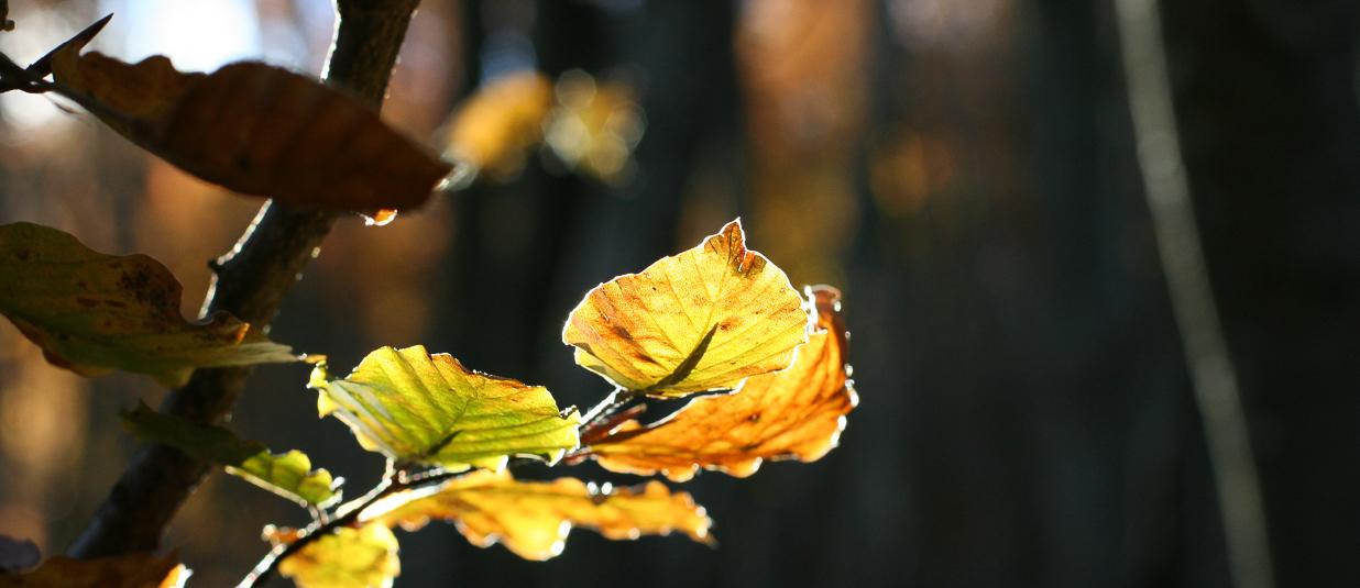 Exerzitien im Herbst